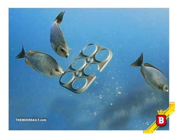 saltwaterediblerings_tbd_2